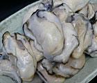 【業務用】広島産冷凍カキ(殻なし)